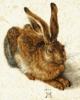 Imagine KIT PICTURA PE NUMERE SCHIPPER YOUNG HARE DE ALBRECHT DURER